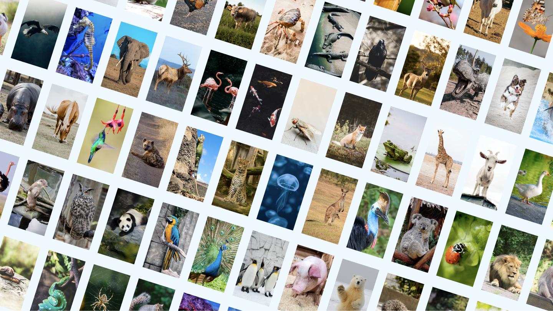 Alpaka, Ameise, Antilope, Gürteltier, Fledermaus, Bär, Biber, Biene, Käfer, Vogel, Stier, Schmetterling, Kamel, Wasserschwein, Kasuar, Katze, Raupe, Tausendfüßler, Chamäleon, Huhn, Streifenhörnchen, Hahn, Kuh, Krabbe, Krokodil, Krähe, Reh, Dinosaurier, Hund, Delfin, Esel, Taube, Libelle, Ente, Adler, Elefant, Elch, Fische, Flamingo, Fliege, Fuchs, Frosch, Giraffe, Ziege, Gans, Gorilla, Heuschrecke, Hamster, Falke, Nilpferd, Pferd, Kolibri, Hyäne, Leguan, Jaguar, Qualle, Känguru, Koala, Marienkäfer, Löwe, Affe, Moskito, Maus, Krake, Strauß, Otter, Eule, Panda, Papagei, Pfau, Pinguin, Schwein, Eisbär, Stachelschwein, Kaninchen, Waschbär, Ratte, Nashorn, Seepferdchen, Seehund, Hai, Schaf, Schnecke, Schlange, Spinne, Eichhörnchen, Seestern, Stachelrochen, Schwan, Tiger, Tukan, Truthahn, Schildkröte, Geier, Walross, Wal, Wolf, Wurm, Yak, Zebra